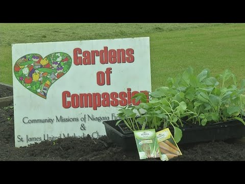 Gardens of Compassions initiative grows food, community relationships