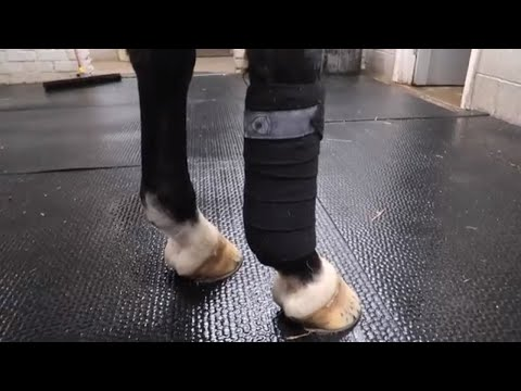 How to bandage a horse for exercise | OTD Grooming Gossip