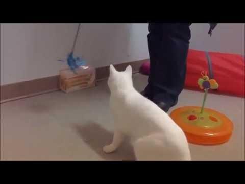 SPCA Cat Adoption
