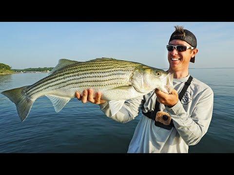 HUGE Striped Bass on Bass Rod - NEW PB!
