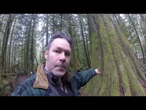 CATHEDRAL GROVE, VANCOUVER ISLAND ,OLD GROWTH FOREST