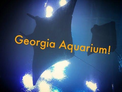 On Location: Georgia Aquarium