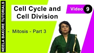 Cell Cycle Cell Division Mitosis Part 3
