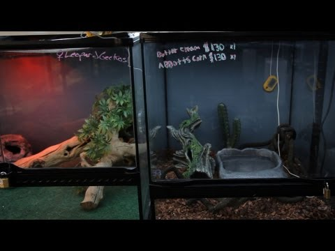 How to Set Up a Snake Aquarium   Pet Snakes