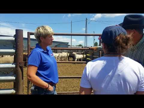 New York beef representatives tour South Dakota beef operations