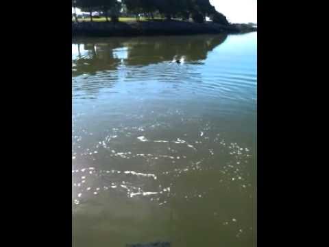 Floating dog ramp