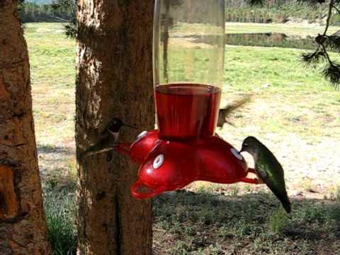 If you like Hummingbirds