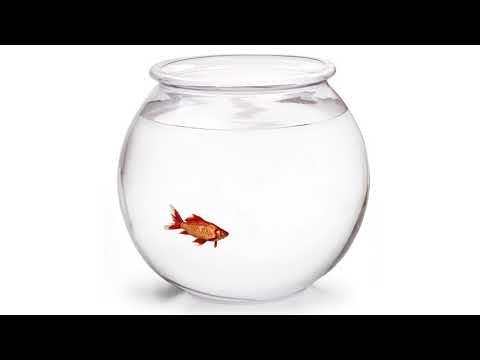 Goldfish in bowl - Moho Pro 12