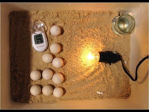 How To Build An Incubator, Homemade Incubator For Chicken Eggs, Incubating Quail Eggs, Hatching Eggs