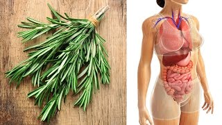 What is Rosemary Good For? Rosemary Health Benefits