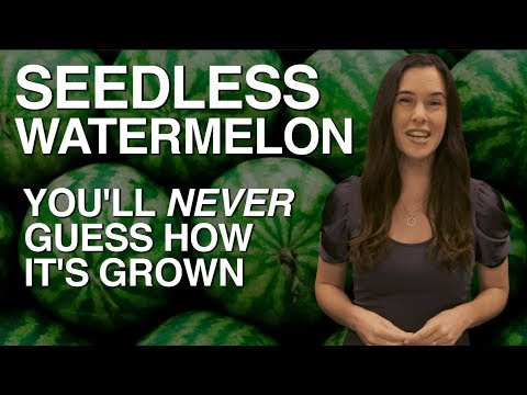 SEEDLESS Watermelon — You'll Never Guess How It's Grown
