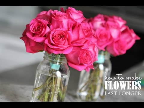 How to Make Your Fresh Flowers Last Longer!