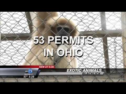 Living With Exotic Animals: How Ohio Families are Legally Keeping Their Pets
