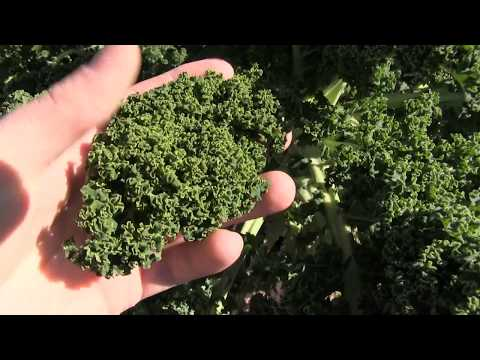 I Have Never Seen Kale this Stunning