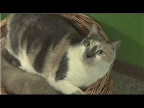 Kitten & Cat Care : Home Remedy for Hairballs