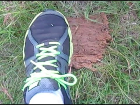 How to CLEAN DOG POOP from SHOES so you have to clean dog POOP FROM CARPET