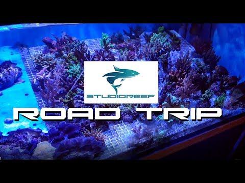 Road Trip For Corals! (OceanReef Shop)
