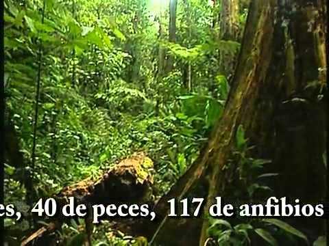 Parque Nacional Corcovado (Costa Rica) - Volunteer Project