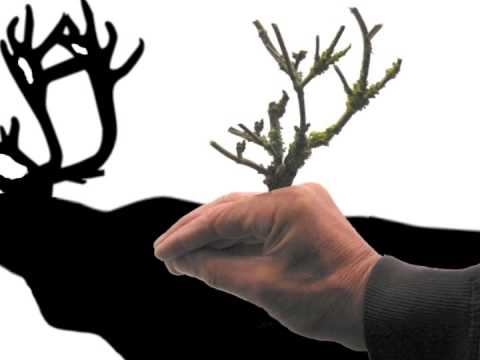 The Art of Making Shadows - How to make hand shadow puppets