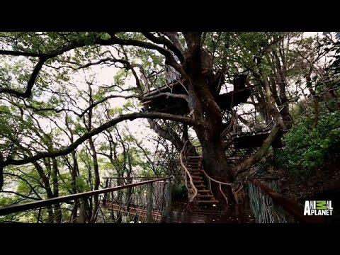 Giant Japanese Treehouse   Treehouse Masters