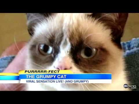 Meet Grumpy Cat!