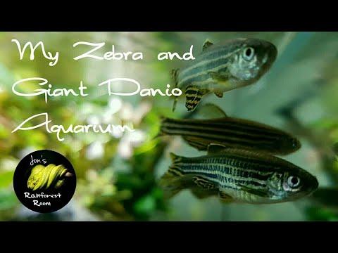 My Coldwater Aquarium