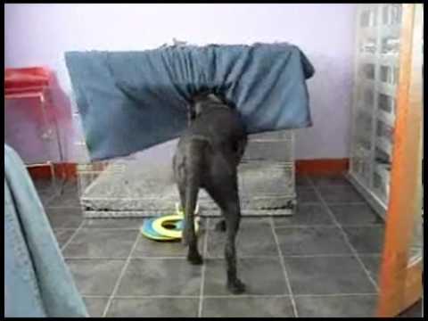Dog perform its nice sleep