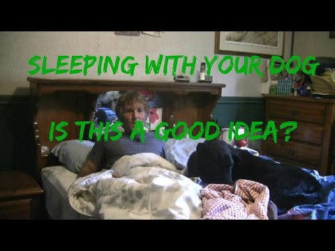 Sleeping With Your Dog: Good or Bad?