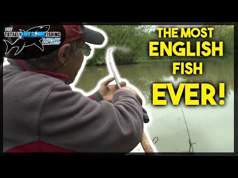 Fishing for The MOST ENGLISH FISH AROUND!