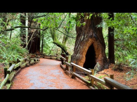 San Francisco - Muir Woods and Wine Country Tour