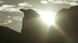 Penguin Protects Egg From African Sun   Africa   BBC Earth