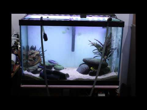 Aquarium algae bloom removed with diatom filter