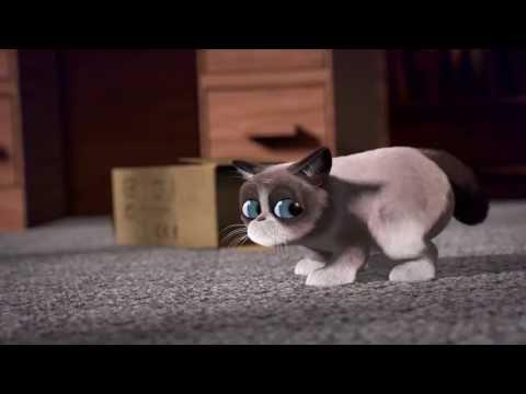 Grumpy Cat - I'll be in my box