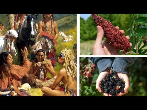 11 Powerful Native American Medicinal Cures