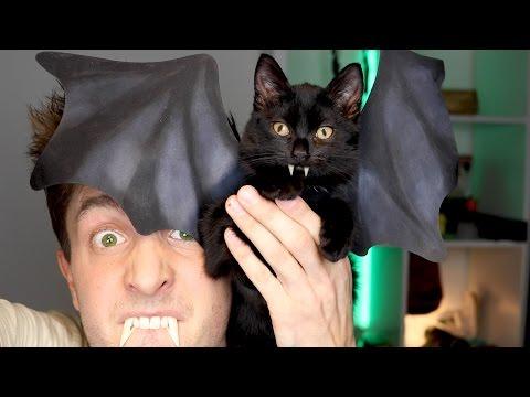Vleermuis Kitten Costuum 😂 | Halloween DIY