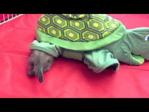Ferrets Playing - Marshall Ferrets