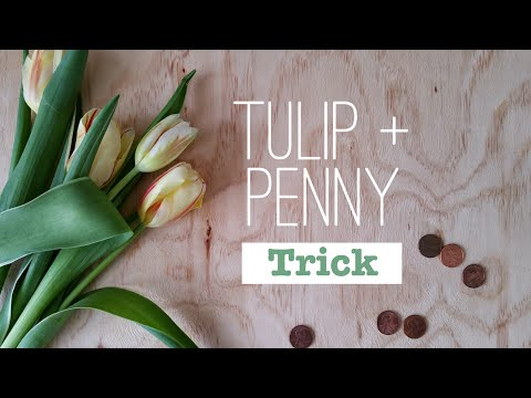 The Penny and Tulip Trick
