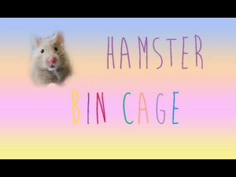 Hamster Bin Cage tour: Syrian hamster: Pebble