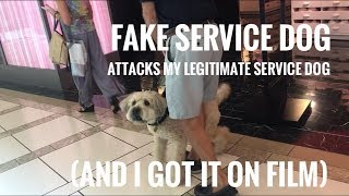 FAKE SERVICE DOG ATTACKS MY REAL SERVICE DOG ON FILM