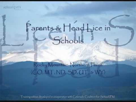 Tips for parents about head lice in schools
