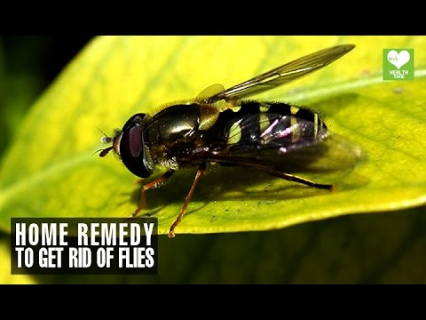 Home Remedies To Get Rid Of Flies | Health Tips | Educational Video