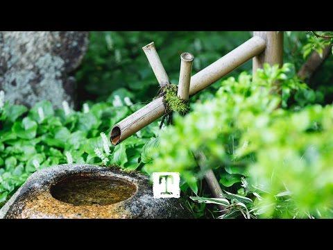 Tea Culture: How to Make Matcha, a Japanese Tea Ceremony #TeaStories | TEALEAVES