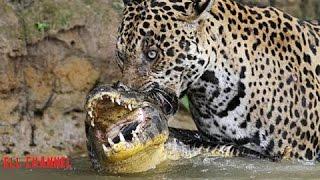 5 ცხოველთა შეშლილი ბრძოლა ნაწილი #3