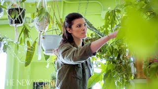 Why Millennials Love Their Houseplant Jungles   Annals Of Obsession   The New Yorker