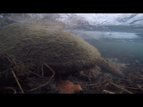 Clear Ice Bass Fishing