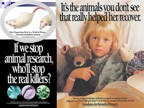 Animal Rights & Welfare