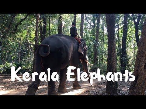 Elephant Camp in Kerala | Abhayaranyam in Kodanad