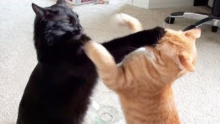 NINJA CATS! There