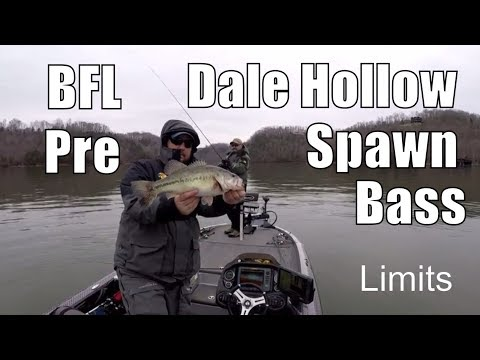 Pre Spawn Transition Bass Fishing - Limits BFL Series