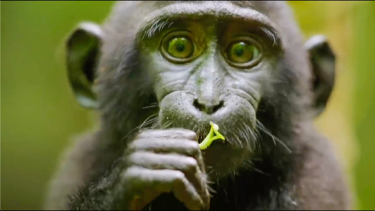 Best Monkey Moments   BBC Earth